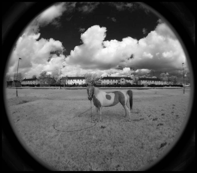 Grangetown Horse