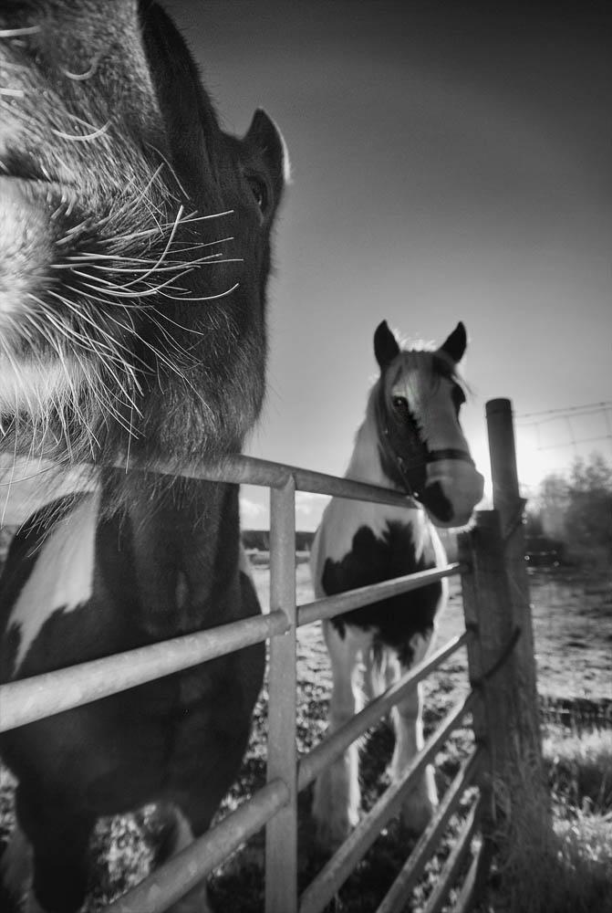 M'bro Horses 1