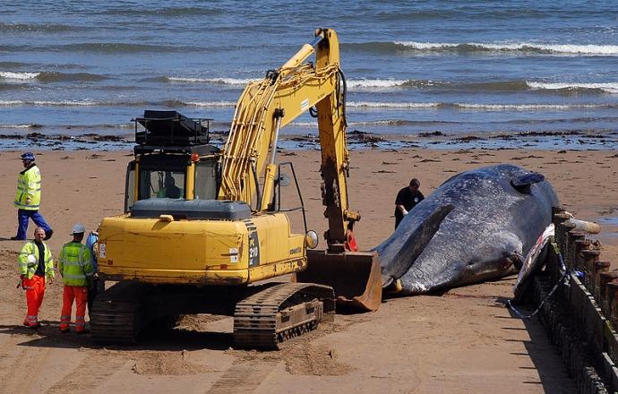 Redcar Whale 2