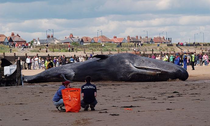 Redcar Whale