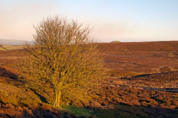 Old Castle Hill Tree