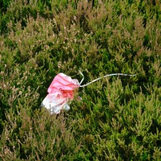 I often find these on a moor, I hate balloons.