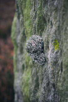 easington-long-stone-lichen