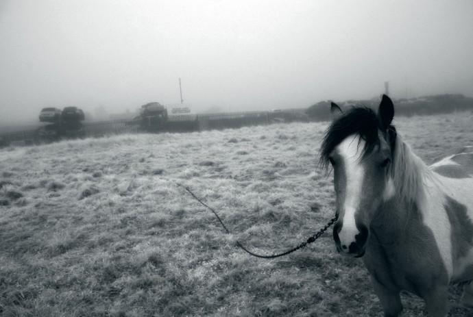 horse-in-fog-i