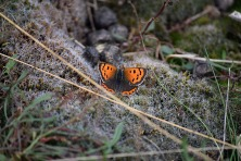 a small copper