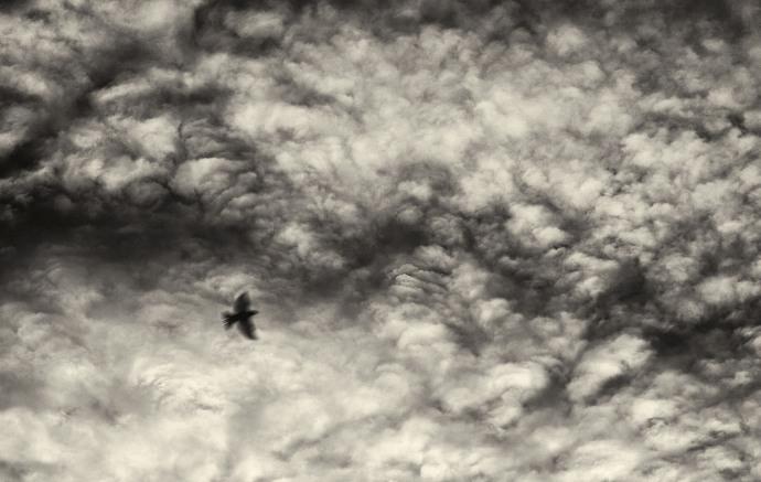 Saltburn Skies