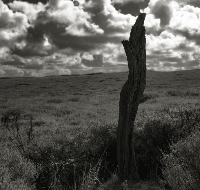 Moorsholm Moor stump s