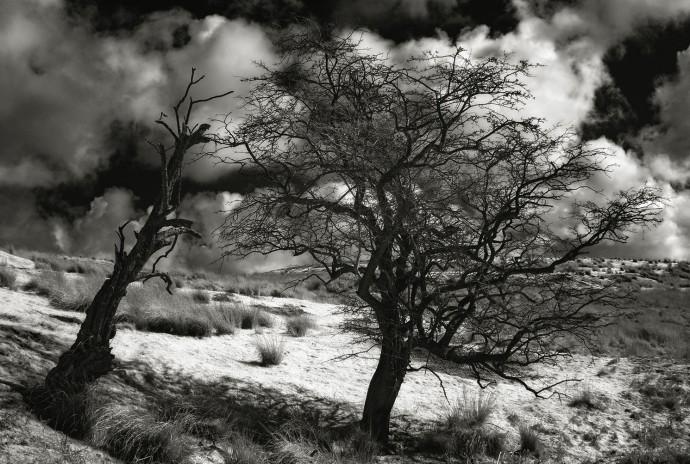 Moorsholm Moor trees s