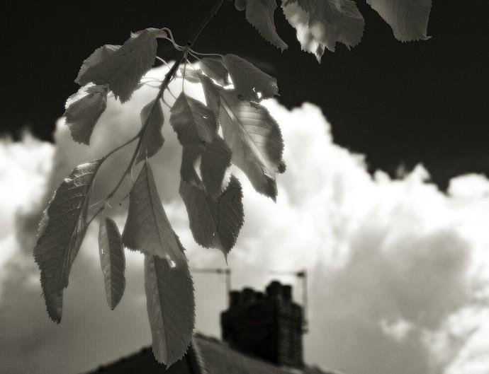 Saltburn skies 2s